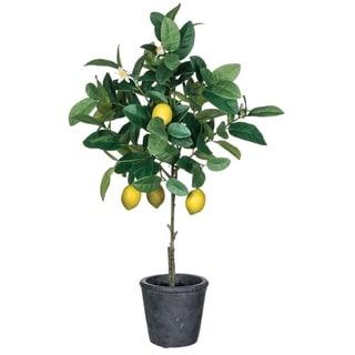 Lemon Potted Plant