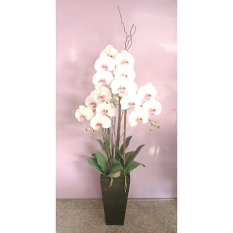 Phalaenopsis Cream / Orchid in V Shaped Base 62 x 20