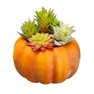 Succulent In Orange Pumpkin