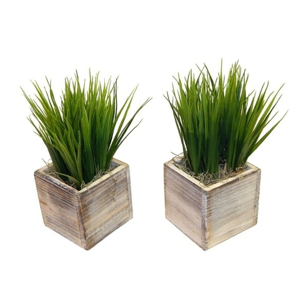 A Set Of Grass In Wooden Containers - Green
