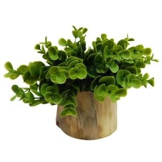 Naturalist Eucalyptus Bonsai - Green