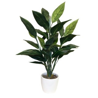 Bird Of Paradise Foliage Floor Plant - Green