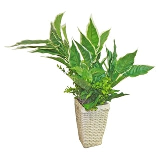 Mixed Hasta And Greenery Floor Plant In Basket Planter - Green