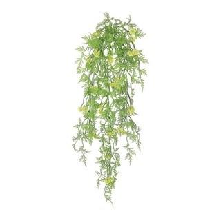 Seeding Mini Lace Fern Hanging Vine - Green