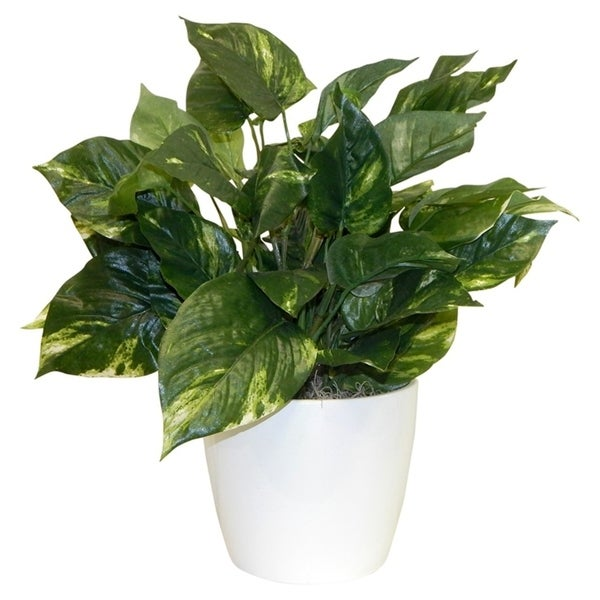 Simple Pothos Plant - Green