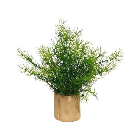 Asparagus Fern in Naturalist Wood Log - Green