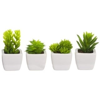 Set Of 4 Succulent Refrigerator Magnets - Green