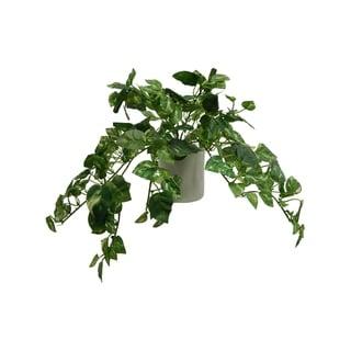 Modern Pothos Arrangement - Green