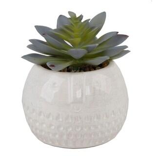 Succulent In Round Cool Face Ceramic - Green
