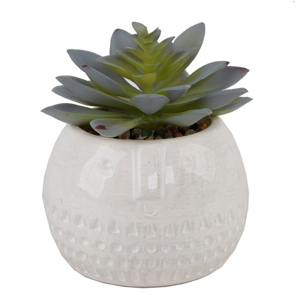Succulent In Round Cool Face Ceramic - Green
