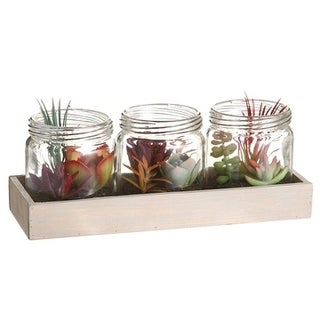 "3.5"" Succulent Garden InGlass Jar X3 W/Wood TrayGreen Brick - Natural"