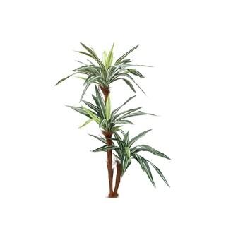 """66"""" Dracaena Tree X3 Unpotted - Green"""