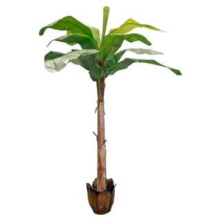 8' Banana Tree Un-Potted - Green