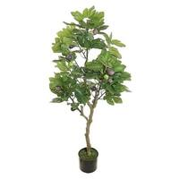 Fruiting fig leaf tree -- 4 ft tall - Green