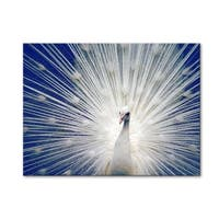 Norman Wyatt Home White Peacock Blue Gallery Wrapped Canvas Art
