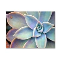 Norman Wyatt Home Refreshing Succulent  Gallery Wrapped Canvas Art