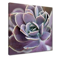 Norman Wyatt Home Royal Succulent  Gallery Wrapped Canvas Art