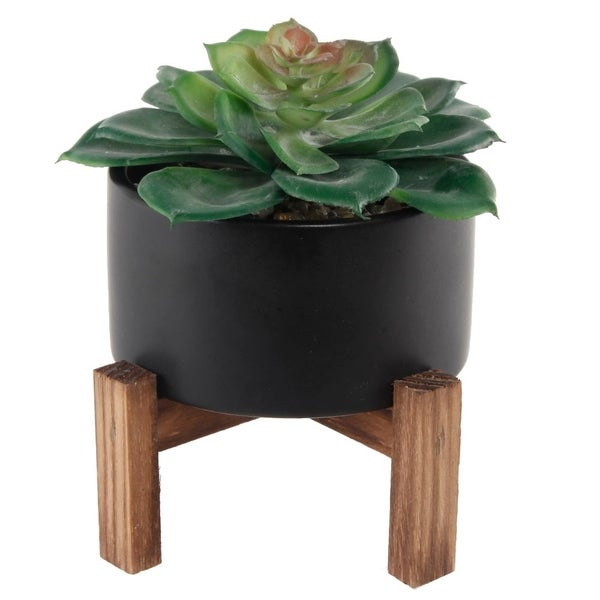 Succ In Blk Ceramic Pot W/ Wood Stand - Green Black