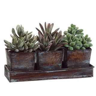 "5.5""Hx3""Wx8.25""L Succulent Garden In Square Tin X3 W/Tray Green - Natural"