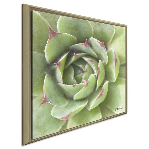 """Laura Marshall """"Garden Succulents II Color"""" Giclee Stretched Canvas Wall Art"""
