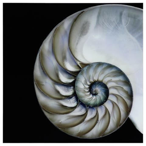 Pearly Nautilus Graphic Wall Art on Free Floating Tempered Glass Panel