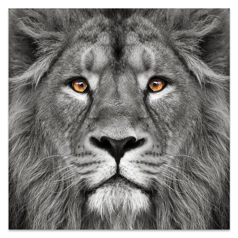 Lion Wall Art Printed on Frameless Free Floating Tempered Glass
