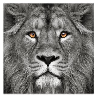 """Empire Art """"King of the Jungle"""" Frameless Free Floating Tempered Art Glass by EAD Art Coop"""