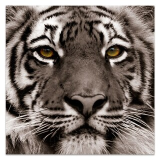 "Empire Art ""Eye of the Tiger"" Frameless Free Floating Tempered Art Glass by EAD Art Coop"