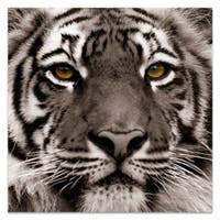 Tiger Wall Art Printed on Frameless Free Floating Tempered Art Glass - Brown