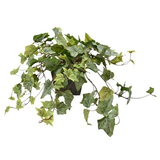 Ivy in Gray Pot - Green