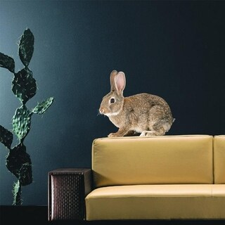"Rabbit Animal Full Color Wall Decal Sticker AN-111 FRST Size 20""x20"""