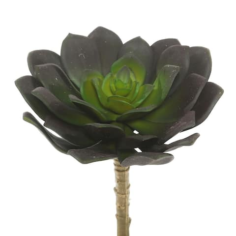 "Vickerman 5.75"" Green Echeveria Succulent"