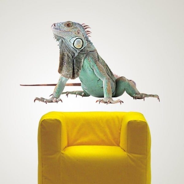 Shop Picture Lizard Full Color Wall Decal Sticker AN-178 FRST Size46 ...