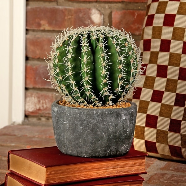 6 Inch Potted Barrel Cactus in cement Base
