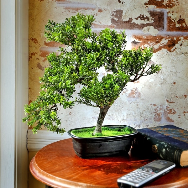 14 Inch Plastic Tabletop Baby Boxwood Bonsai