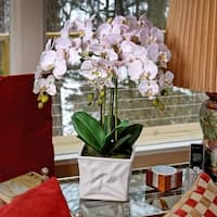 24 Inch Triple Branch Orchid in White Cache  Vase