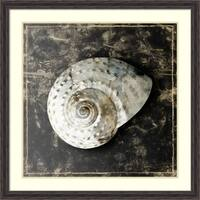 Framed Art Print 'Marble Shell Series II' by Edward Selkirk