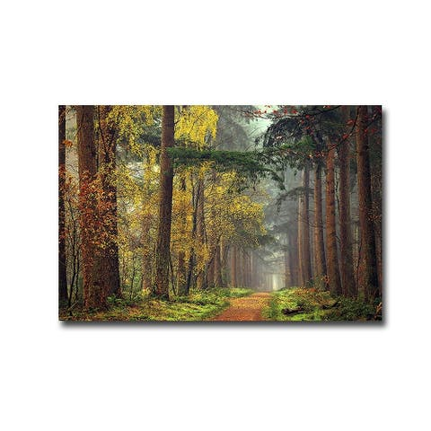 Colors of the Forest by Lars Van De Goor Gallery Wrapped Canvas Giclee Art - 24 x 36