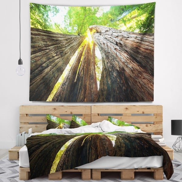 Designart 'Sequoia Tree' Photography Wall Tapestry