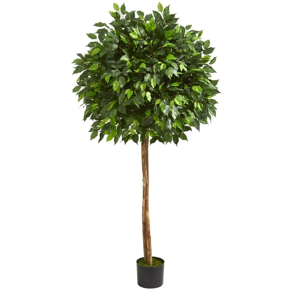 5.5' Ficus Artificial Tree - h: 5.5 ft. w: 18 in. d: 18 in