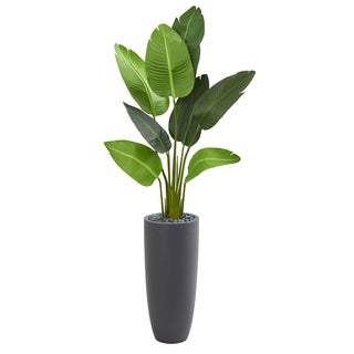 5.5' Traveler's Palm Artificial Tree in Gray Planter - h: 5.5 ft. w: 28 in. d: 22 in