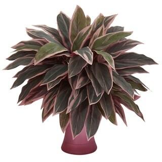 Caladium Artificial Plant in Rose Vase - h: 20 in. w: 18 in. d: 18 in