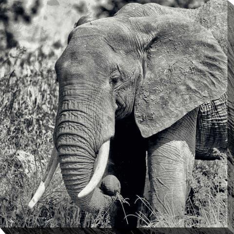 """LONE ELEPHANT"" Framed Print on Canvas"