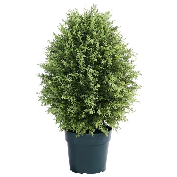 "30"" Cypress Tree"