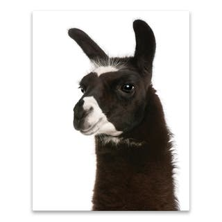 """Close Up of Llama"" Printed Canvas - 22W x 28H x 1.25D - Multi-color"