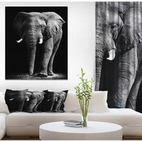 Designart 'African Elephant in Black Background' Africa Animals Photography on Wrapped Canvas