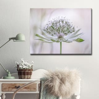 Astrantia' Floral Wrapped Canvas Wall Art