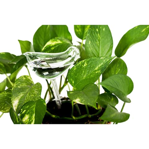 Clear Aqua Globes Plant Watering Glass Bulbs - Bird Design