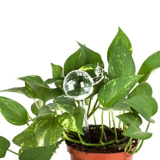 Clear Aqua Globes Plant Watering Glass Bulbs - Snail Design