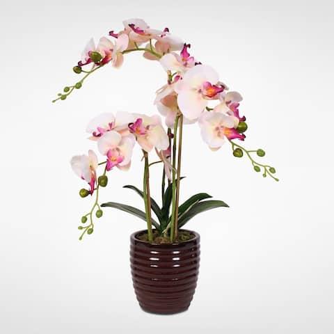 Silk Cream Pink Phalaenopsis Orchids in a Dark Red Ceramic Vase